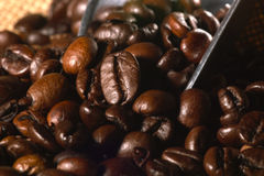 Freshly roasted coffee Stock Image