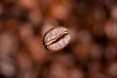 Freshly roasted coffee bean Stock Photography