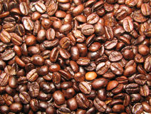 Freshly roasted coffee beans. Freshly roasted Tanzanian coffee beans Stock Photography