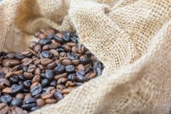 Freshly roasted coffee beans in a burlap sack royalty free stock images
