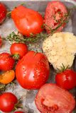 Roasted tomatoes, garlic and herbs royalty free stock photography