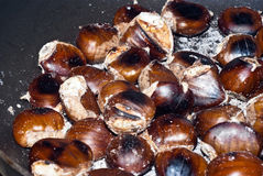 Freshly roasting chestnut Stock Image