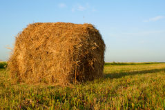 Freshly rolled hay bale Royalty Free Stock Images