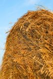 Freshly rolled hay bale Stock Images