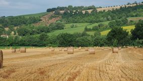 Freshly rolled hay bales in a field in Tuscany Italy. Golden and relaxing contest. Summer season stock video footage