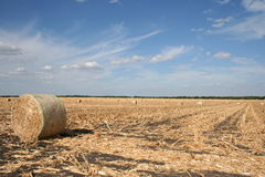 Freshly rolled hay in field. Freshly rolled hay along a field in Texas with blue cloudy sky Royalty Free Stock Photography