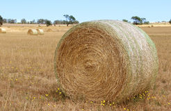 Freshly rolled hay Victoria Australia Stock Images