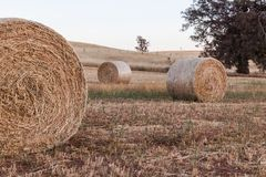 Freshly rolled haybails on a countryside in the Adelaide hills S Royalty Free Stock Photos