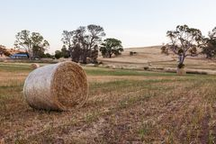 Freshly rolled haybails on a countryside in the Adelaide hills S Stock Images