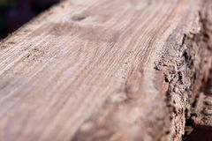 Freshly sawed flat surface on a tree trunk. With bark viewed at an oblique angle with shallow dof showing the pattern of the woodgrain Stock Photography
