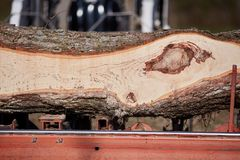 Freshly sawed tree trunk showing a knot. Freshly sawed tree trunk on a milling machine showing the dark woodgrain pattern formed where a branch has formed a knot Royalty Free Stock Image