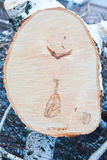 Freshly sawn birch trunk Stock Images