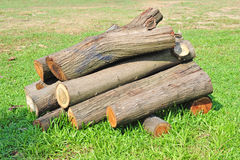 Freshly Sawn Tree Trunks Stock Photos