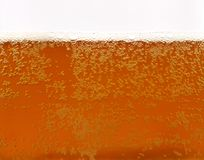 Freshly served beer. With foam and bubbles Royalty Free Stock Image