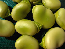 Freshly shelled broad beans. Royalty Free Stock Image