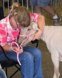 Freshly Shorn. A farmhand cares for a sheep that was recently shorn of its coat in the Livestock Hall at the Wisconsin State Fair Stock Image
