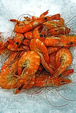 Freshly shrimp on a bed of crushed ice Stock Photos