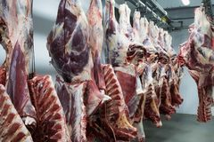 Freshly slaughtered halves of cattle. royalty free stock images