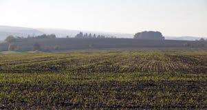 Freshly sown field. In fog Royalty Free Stock Photos
