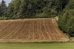 Freshly sown field in the forest hill. Freshly sown field in the autumn forest hill Stock Image
