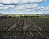 Freshly Sown Fields Royalty Free Stock Images