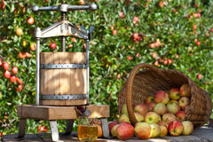 Freshly squeezed Apple Juice. Some Apple gets squeezed to a fresh Apple Juice. Some Apple Trees are behind it stock photos