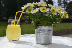Freshly squeezed lemonade on a table, next to a flower pot Royalty Free Stock Images