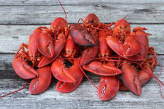 Freshly Steamed Lobsters in Pile. Seven Freshly Steamed Lobsters in Pile (Ready for feasting royalty free stock photo