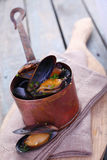 Freshly steamed marine mussels in a copper pot Stock Photos