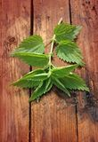 Freshly stinging nettle on a wooden background Stock Photography