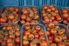 Freshly Stocked Tomatoes Royalty Free Stock Photos