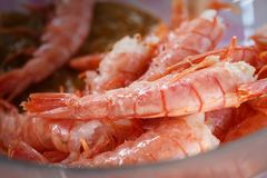 Freshly thawed shrimps lie on a plate.  royalty free stock photography