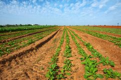 Freshly Tilled and Planted Field Royalty Free Stock Photography