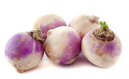Freshly turnips Stock Photography