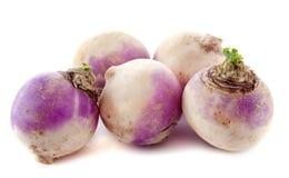 Freshly turnips Stock Photography
