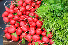 Freshly turnips Royalty Free Stock Images