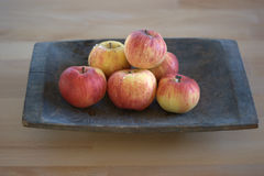 Freshly washed apples in an antique wooden trencher. Picture of freshly washed apples Malus pumila / Malus domestica in a wooden antique trencher. The ripe Stock Images