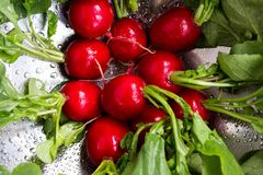 Washed radishes in a metallic bowl. Freshly washed radishes in a metallic bowl close up Royalty Free Stock Photos