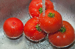 Washing fresh tomatoes. Using running water in a stainless steel/silver kitchen sink to wash fresh, red, homegrown tomatoes Royalty Free Stock Image