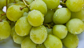 Freshly Washed White Grapes Royalty Free Stock Photography