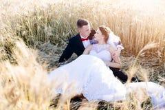 Freshly wed bride and groom posing in wheat field. Royalty Free Stock Images