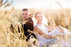 Freshly wed bride and groom posing in wheat field. Royalty Free Stock Photography