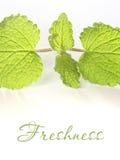 Freshness Royalty Free Stock Photography