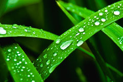 Freshness. Rain droplets on the green grass Stock Photography