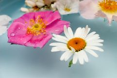 Freshness. An image with various flowers in the water Royalty Free Stock Photography