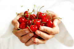 Freshness 3. Handful of fresh cherries Stock Images