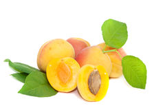Freshness Apricot stock photography