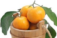 Freshness fruit. Freshness tangerine and wooden pail on white background stock photos