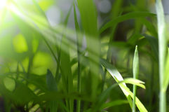 Freshness grass in nature Stock Photography