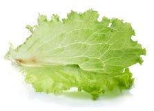 Freshness green lettuce salad Stock Photo
